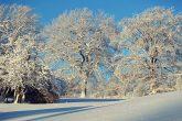 winter-1861695_960_720